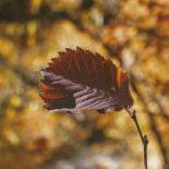træt blad efterår